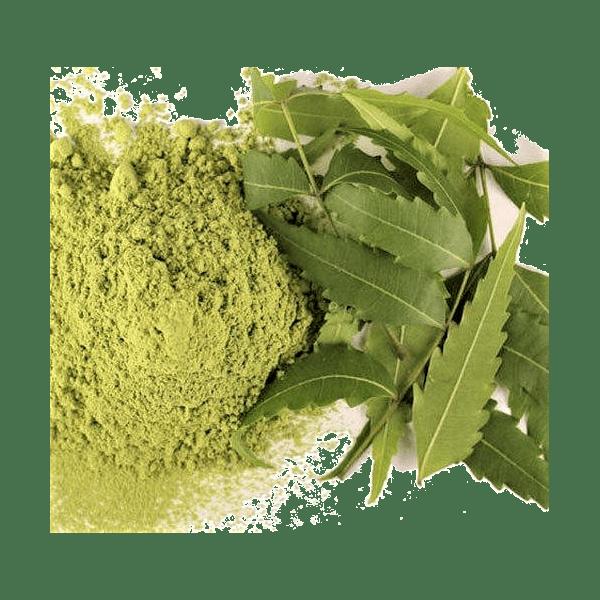 Feuilles et poudre de neem