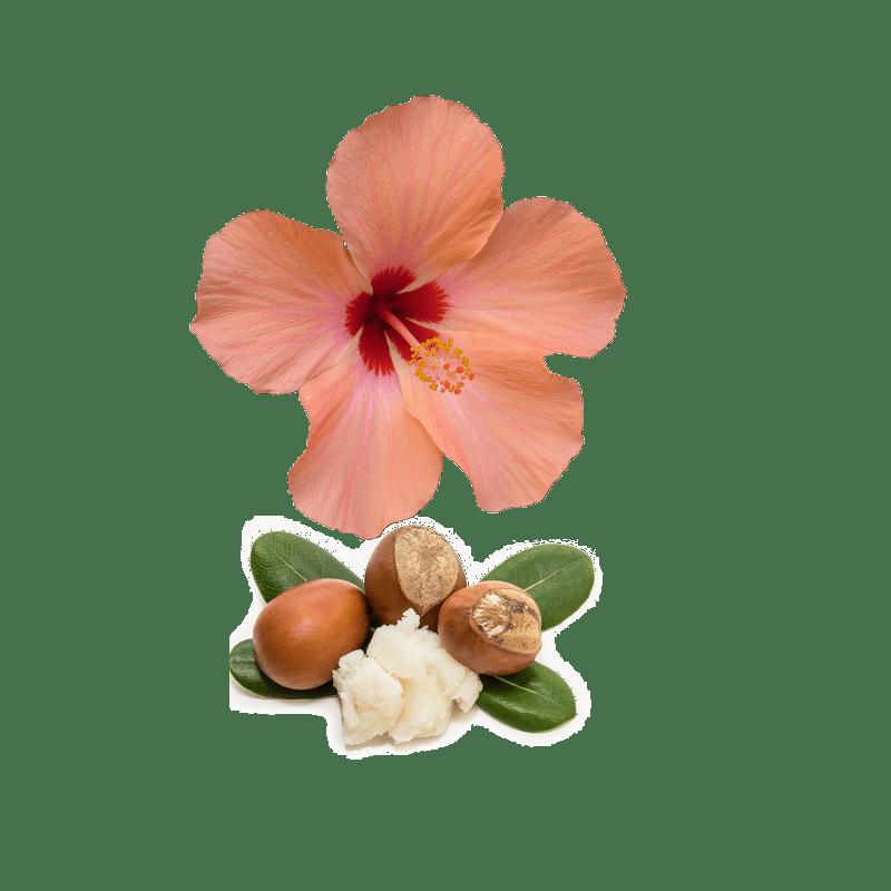 Hibiscus Karité